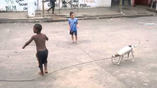 Dog Swings Rope for Kids