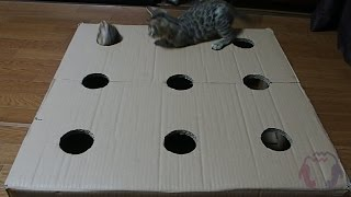 Kittens Play Whack-a-Mole