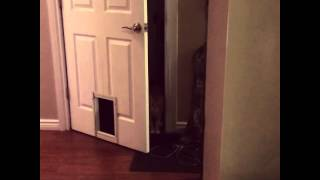 Cat's Unique Entry