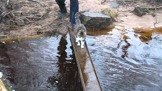 Cat Doesn't Want to Get Paws Wet