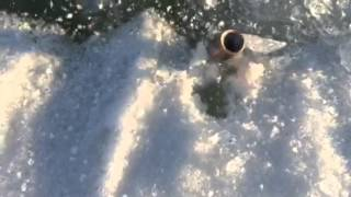 Bullet Spinning on Ice