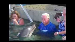 Dolphin Spits at Man, Man Spits in Return