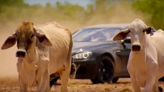 Top Gear Vs 4,000 Cows