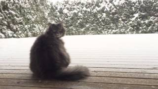 The Cat That LOVES Snow