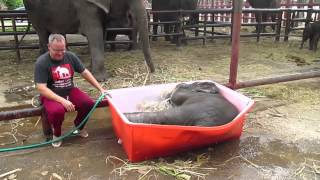 Baby Elephant Enjoys a Bath