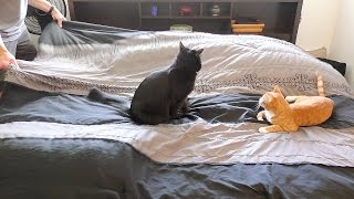 Making a Bed With Cats