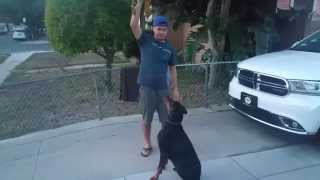 Jumping Dog Gets a Surprise
