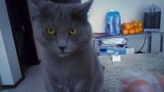 Cat's Weird Reaction to Plastic