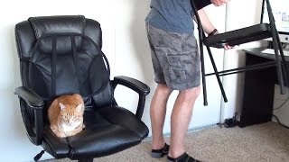 How To Survive Working With Cats!