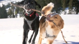 Ski Patrol Dogs of Snowmass