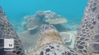Turtle Swims Through Great Barrier Reef
