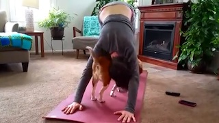 Cats and Dogs Interrupting Yoga Compilation