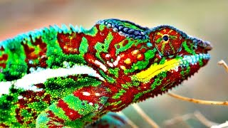 The Changing Colours of Chameleons Explained