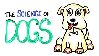 The Science of DOGS