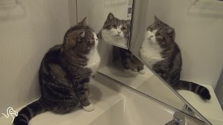 Cats versus Mirrors