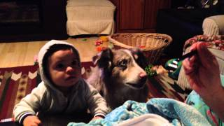 Dog Learns Faster Than Baby