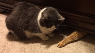 Cats Stealing Stuff Compilation