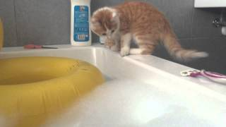 Kitten Falls in a Bathtub