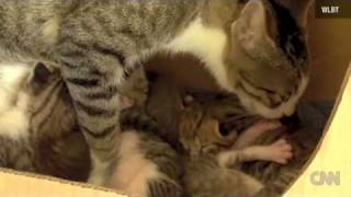 Squirrel Adopted by Cats Learns to Purr!