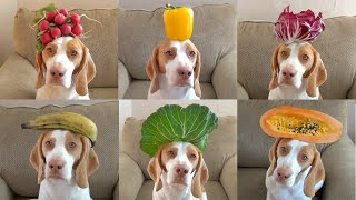 100 Fruits & Vegetables on Dog's Head