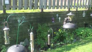 Squirrel Gets What He Wants!