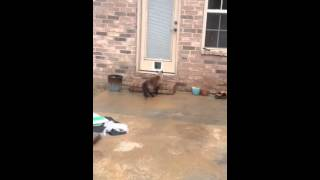 Epic Cat Door Fail