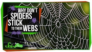 Why Don't Spiders Stick to Their Webs?