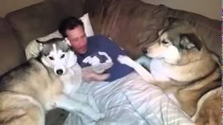 Jealous Dog Wants Attention