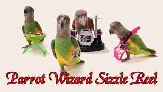 Parrot Wizard Sizzle Reel 2015
