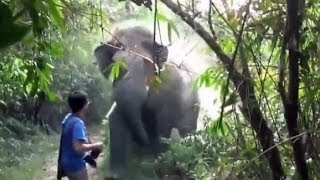 When An Elephant Charges at You, This is What You Do