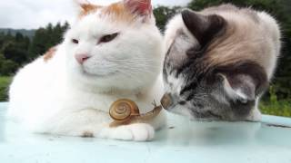 Two Cats and a Snail